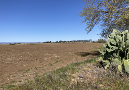 Fantastic opportunity to purchase Agricultural land in Woodland